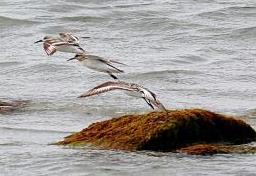L'observation des oiseaux sur la péninsule d'Erris